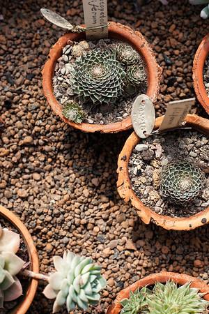 2016-06-10_Cactus_Greenhouse_045