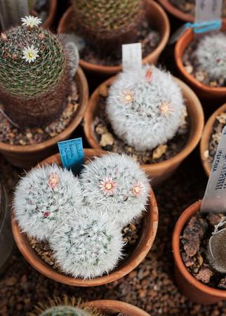 2016-06-10_Cactus_Greenhouse_023