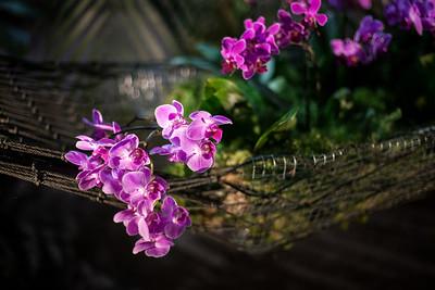 2016-10-28_Orchids_026