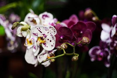 2016-10-28_Orchids_019