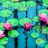 Oil Glaze Lilies