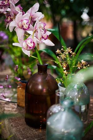 2016-10-28_Orchids_034