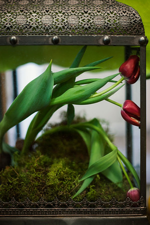 2017-03-05_Tulips_021