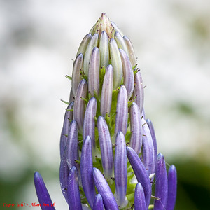 Unidentified Flower - French Alps