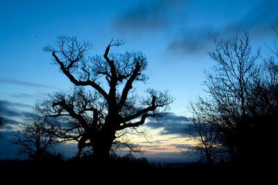I really like this twisted old tree so got up early one day. I've deliberately cooled the colours down a bit to emphasise the silhouette and slightly spooky feel. It's on a crossroads, you know . . .