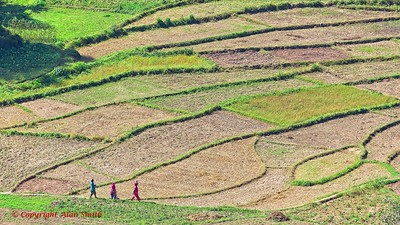 Field Workers - India
