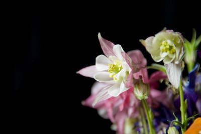 FlowersOnBlack2