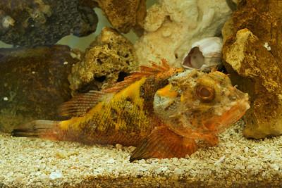 Barbfish - Apalachicola, FL