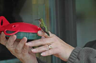 Hummingbird on my wife's finger  - Dunning Lake - Itasca County, MN