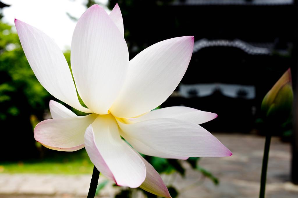 Flying Lotus