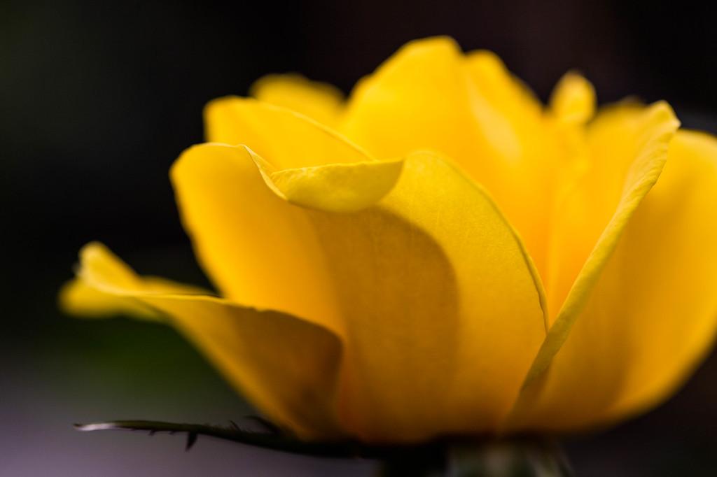 Light in Yellow