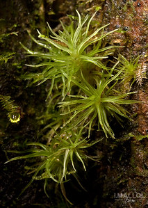 Mosses are cool ;)