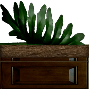 Plant 3 Box