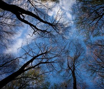 Ajstrup forest