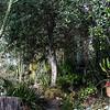 Special Garden - I