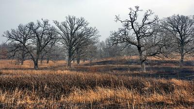 Controlled Prairie Burn 2