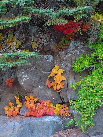 Fall Color - Lake Superior