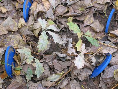 2013-09-27, Planted oaks