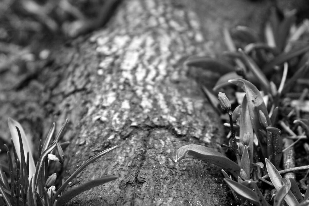 "<a href=""http://hampsonphoto.blogspot.com"">M. E. Hampson Photography</a>"