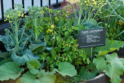 Companion Planting display