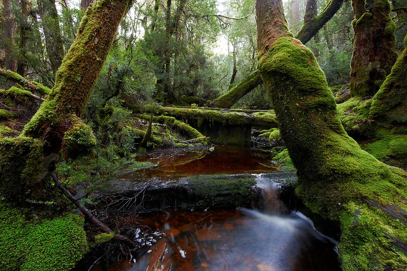 Waldheim Forest, Cradle Mountain, Tasmania