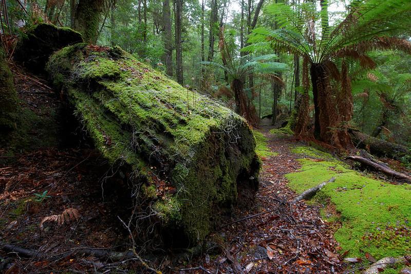 Balfour Track, Tarkine, Tasmania