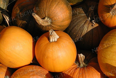 #158  Small pumpkins, collected