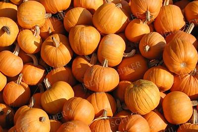 #149  Small pumpkins in a bin