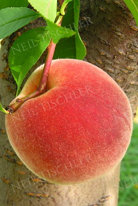 #281 THE perfect (white) peach!