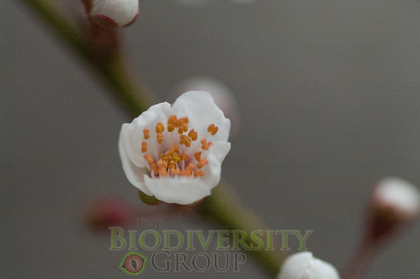 Biodiversity Group, PICT2091