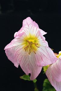 flower1 1