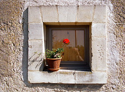 window flower-34 1