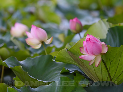 LOTUS_SAC_CO_CA_2016-08-30_D01_2500_4410