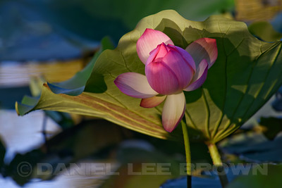 LOTUS_SAC_CO_CA_2016-08-30_D01_2500_4445