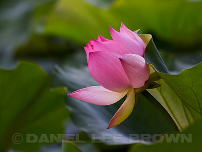 LOTUS_SAC_CO_CA_2016-08-30_D01_2500_4422