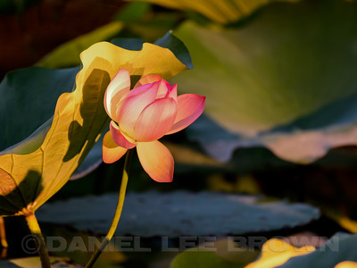 LOTUS_SAC_CO_CA_2016-08-30_D01_2500_4432