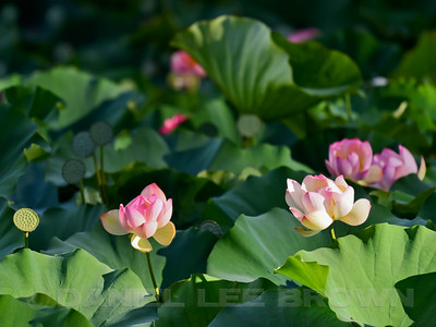 LOTUS_SAC_CO_CA_2016-08-30_D01_2500_4691