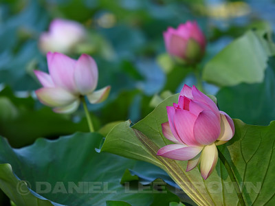 LOTUS_SAC_CO_CA_2016-08-30_D01_2500_4453