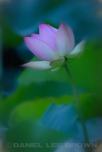 LOTUS_SAC_CO_CA_2016-08-30_D01_2500_4383-copy
