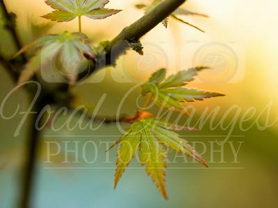 Foliage and Trees