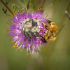 A plant that supplements both wildlife and pollinators.