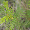 Close up photograph of fern in Anson, Texas.
