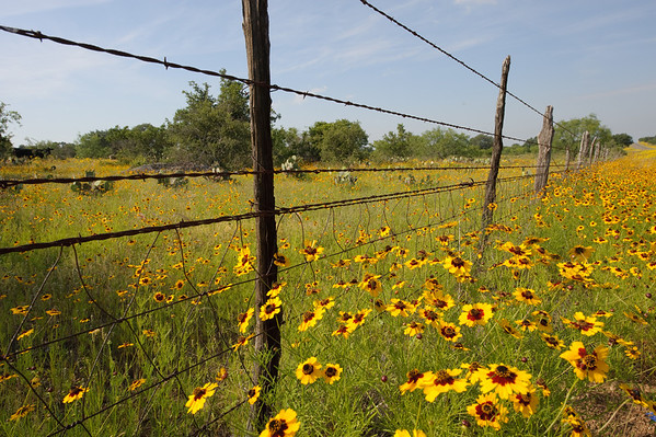 Flowers fill the landscape during Hill Country Springs.
