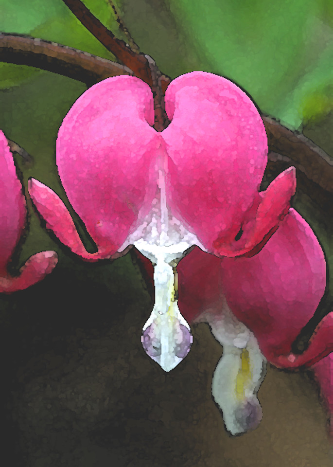 "Bleeding Heart ""watercolor"": for 5x7 prints"