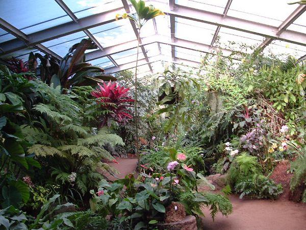 tropical greenhouse, L.A. Arboretum,  11 Jan 2004