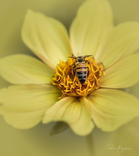 Bee in Composite