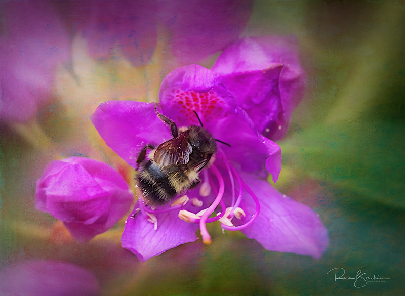 Bee in Azalea