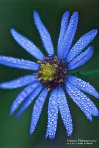 Georgia Native Plants