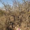 Golan Heights, Bashanit Ridge