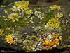 Lichen and Moss garden - Wagner Natural Area, Spruce Grove, Alberta